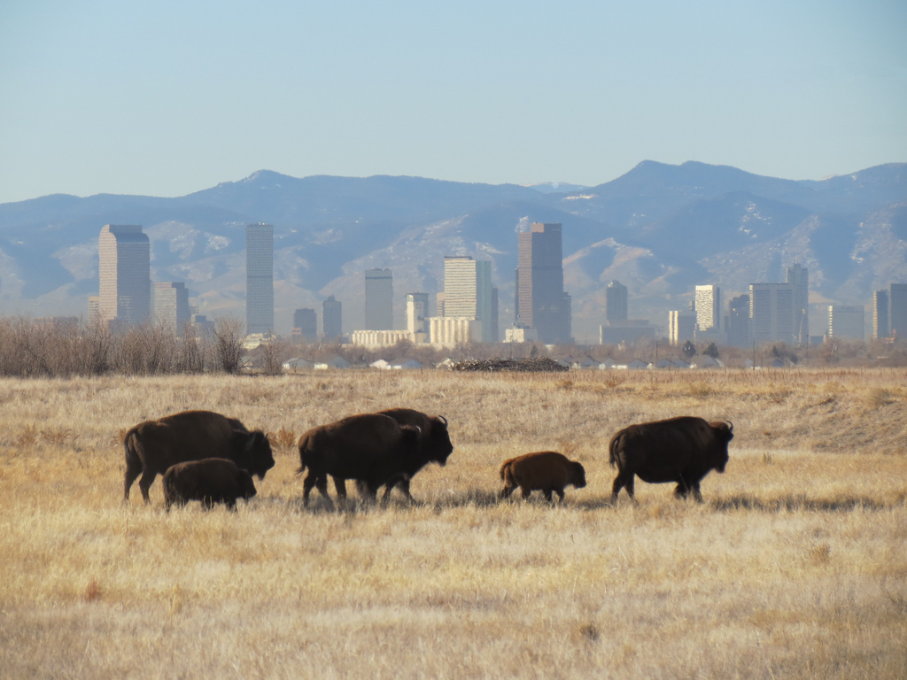 A Rocky Mountain Arsenal for Nature Lovers